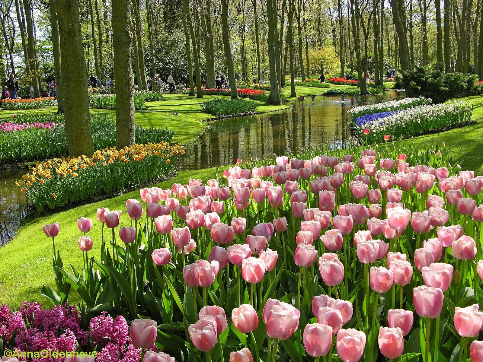 Bunga Tercantik Di Dunia Bunga Tercantik Di Dunia